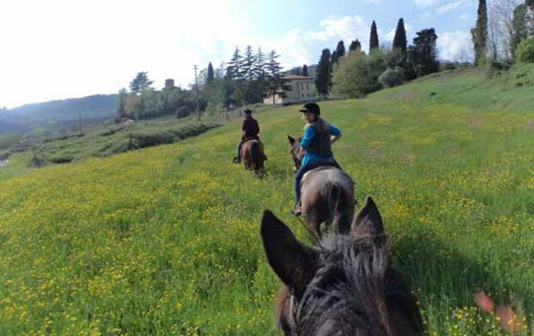 Riding out with Lucca Horseriding
